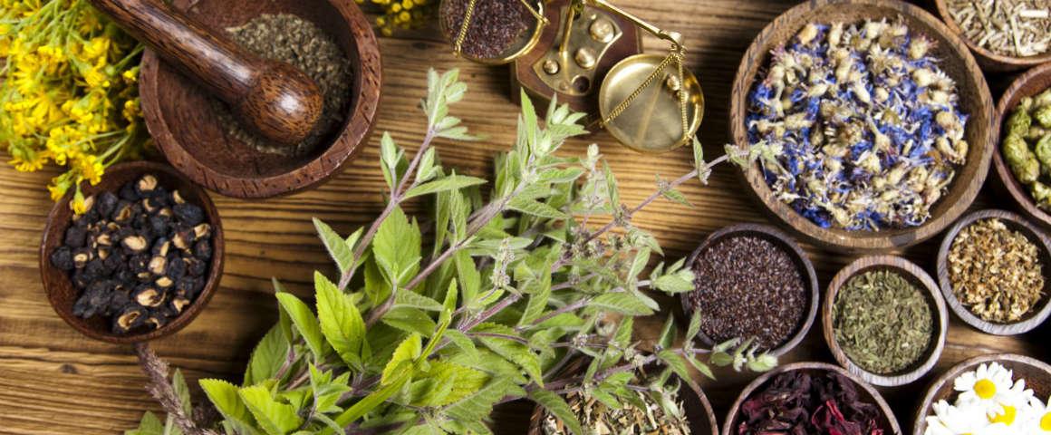 La-top-ten-delle-botaniche-piu-insolite