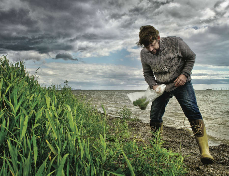 Foraging: l'arte di raccogliere erbe e botaniche