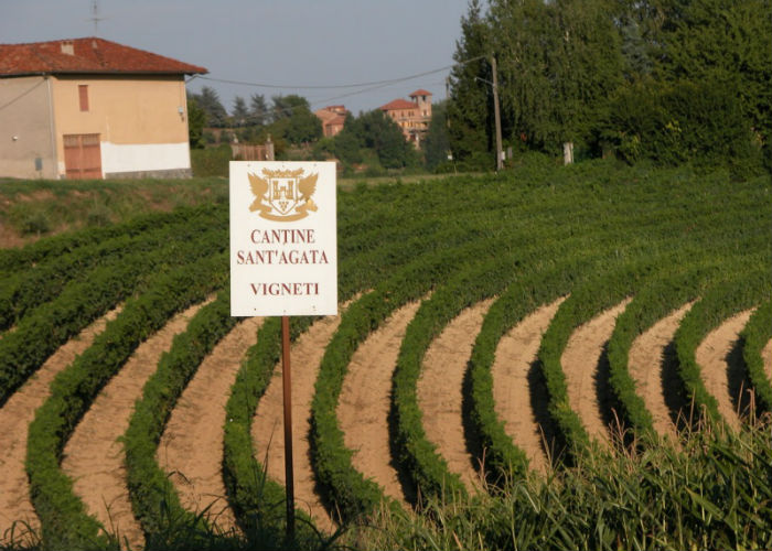 gin agricolo