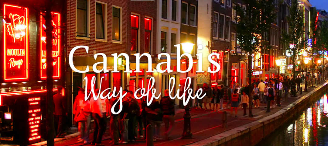 Cannabis Sativa Gin: il cuore di Amsterdam in un bicchiere