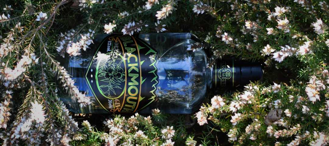blackmouth dry gin